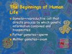 the beginnings of human life