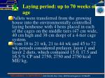 laying period up to 70 weeks of age