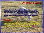 pastier a ovca