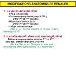 modifications anatomiques renales