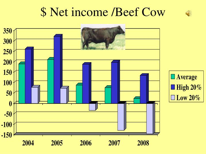 $ Net income /Beef Cow