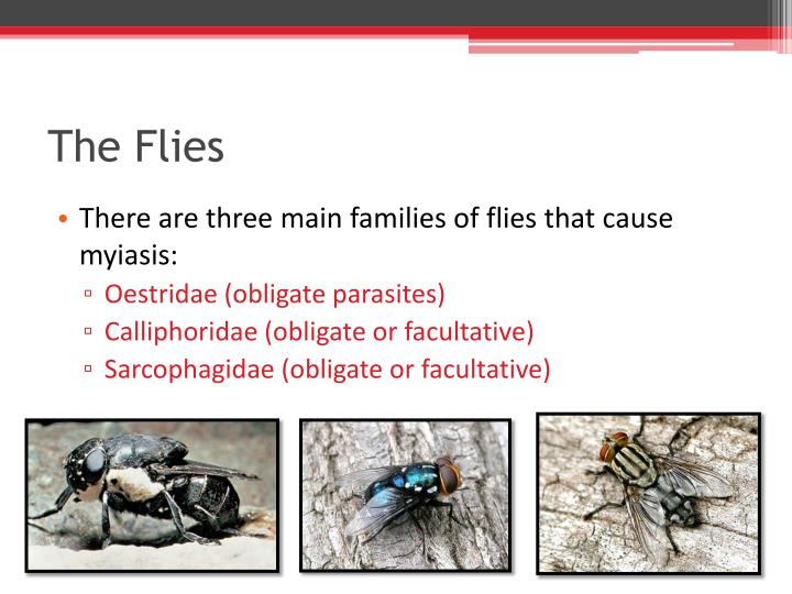 Facultative Myiasis Images - Reverse Search