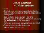 genus trichuris trichocephalus