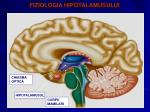 fiziologia hipotalamusului