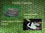 fam lia viperidae1