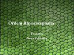 ordem rhyncocephalia
