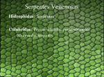 serpentes venenosas1