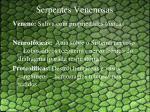 serpentes venenosas2