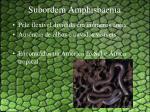 subordem amphisbaenia