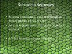 subordem serpentes3