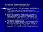 evolutia spermatozoizilor