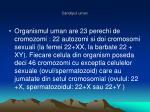 cariotipul uman4