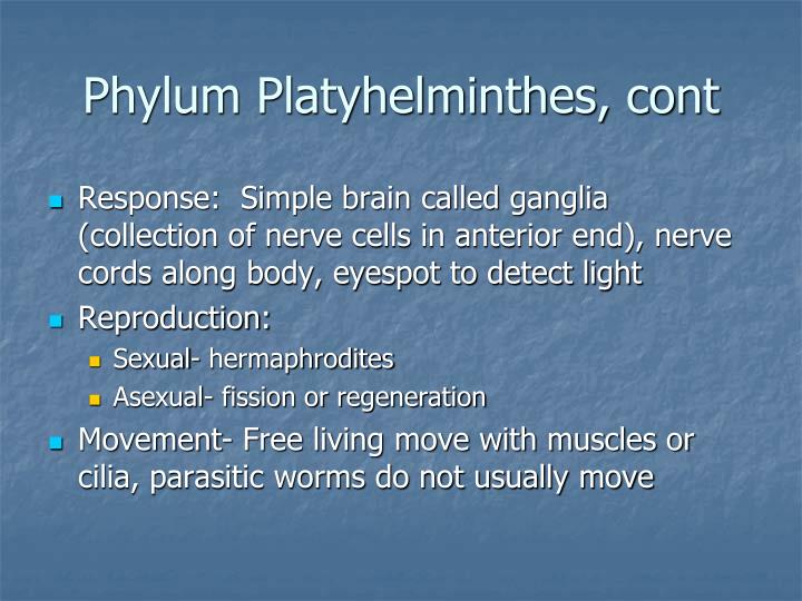 Phylum Platyhelminthes, cont