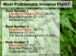 most problematic invasive plant