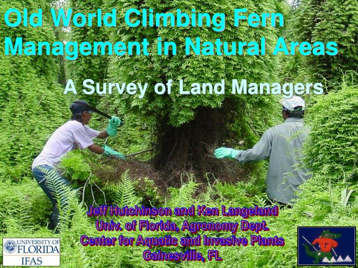old world climbing fern management in natural areas a survey of land managers n.