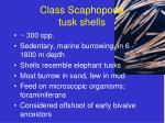 class scaphopoda tusk shells