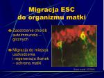 migracja esc do organizmu matki