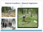 riparian condition riparian vegetation