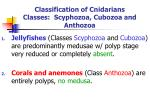 classification of cnidarians classes scyphozoa cubozoa and anthozoa