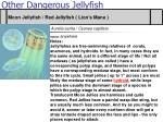 other dangerous jellyfish