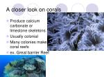a closer look on corals