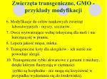 zwierz ta transgeniczne gmo przyk ady modyfikacji2