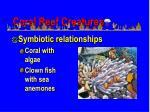 coral reef creatures1