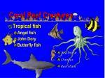 coral reef creatures2