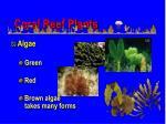 coral reef plants1