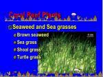 coral reef plants2