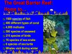 the great barrier reef home to