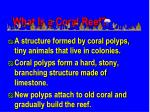 what is a coral reef