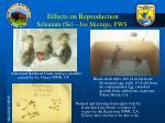 effects on reproduction selenium se joe skorupa fws