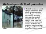 wetlands provide flood protection