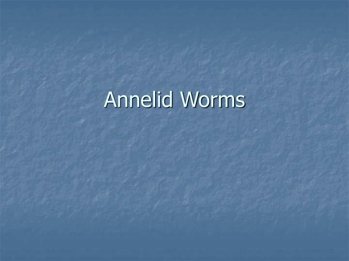 annelid worms n.