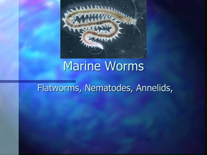 marine worms n.