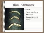 bean anthracnose1