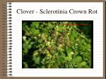 clover sclerotinia crown rot