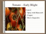 tomato early blight1