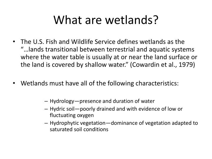 what are wetlands n.