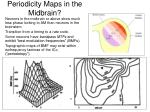 periodicity maps in the midbrain