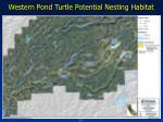 western pond turtle potential nesting habitat