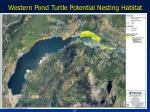 western pond turtle potential nesting habitat1