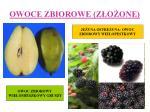 owoce zbiorowe z o one4