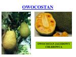 owocostan3