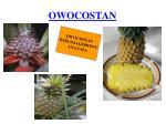 owocostan4