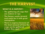 the harvest1