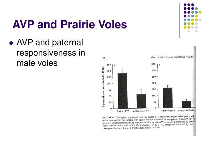 AVP and Prairie Voles