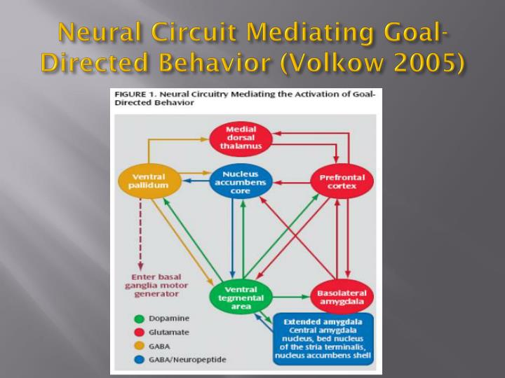 the mediating effect of relatedness need Rejection sensitive people often experience interpersonal difficulties, resulting in dissatisfaction with their need for relatedness however, whether they are satisfied with their autonomy and competence, or experience difficulties from these factors other than in interpersonal relationships, remains largely unexplored.