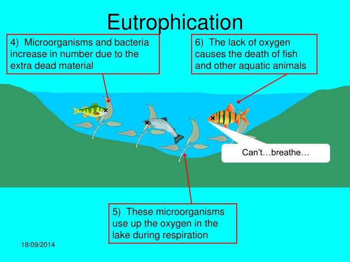 4)  Microorganisms and bacteria increase in number due to the extra dead material